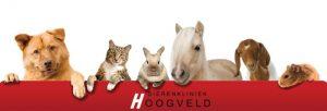 Hoogveld