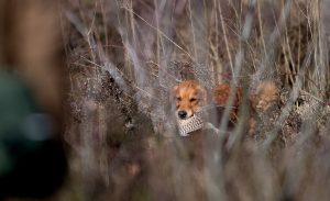 Matthew Van De Golden Jagers J00_0192 Bronvermelding jeroenfotografie.nl