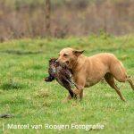 myrfoto.nl